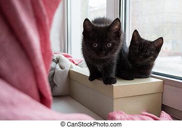 two cute black kitten sitting on a box on the windowsill