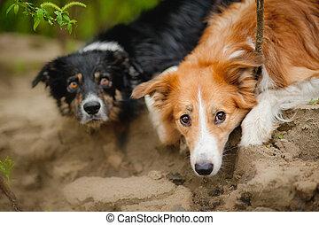 Two cute dog portrait