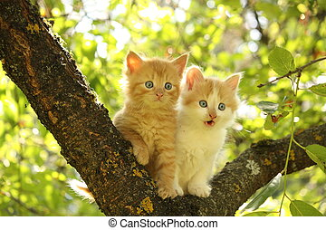 Two cute kittens sitting on the tree branch in summer
