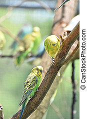 Two Cute Little Parakeets in a Tree