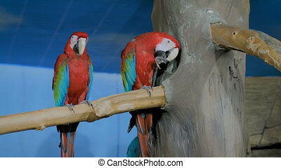Two cute macaw parrots sitting on tree. Exotic animal and ...
