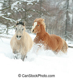 Two cute ponnies running in winter
