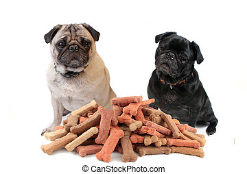 Two cute pugs behind dog treats - Two cute pugs sitting...