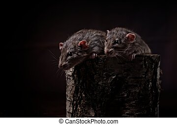 Two cute rodents in a tree trunk looking curious sideways..