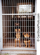 two cute strayed dogs in dog shelter.