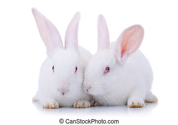 Two cute white baby rabbits.