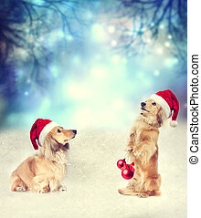 Two Dachshund dogs with Santa hats together