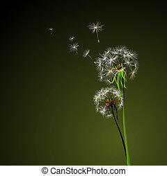dandelions - two dandelions in wind on dark background