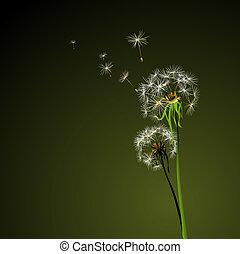dandelions - two dandelions in wind on dark background