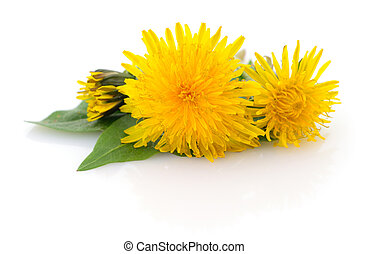 Two dandelions with leaves.