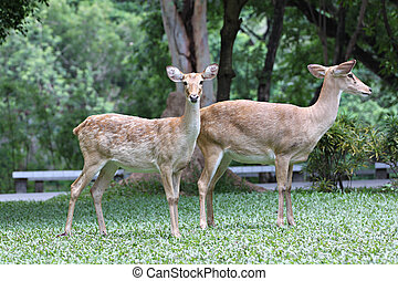 Two deer on the green grass.