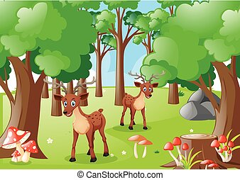 Two deers in the forest