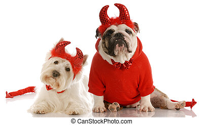 two devils - english bulldog and westie dressed up as devils