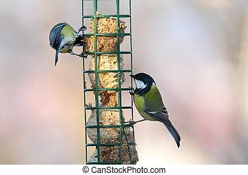 two different species on bird feeder