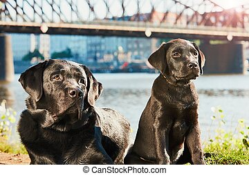 Two dog on the walk