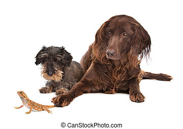 two dogs and a lizard in front of a white background