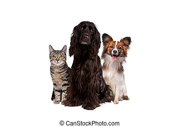 two dogs and one tabby cat sitting in front of a white background