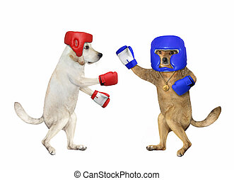 Two dogs are boxing