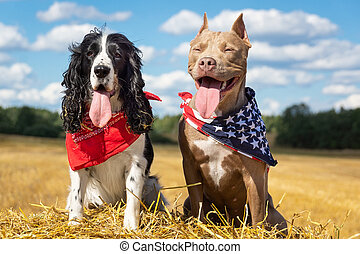 two dogs at a haystack