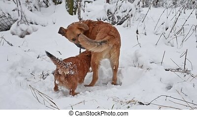 two dogs fight in the winter on the street. Cute dog stray...