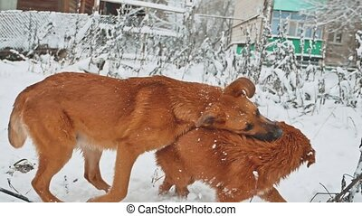two dogs fighting in the snow winter. lifestyle two dogs...