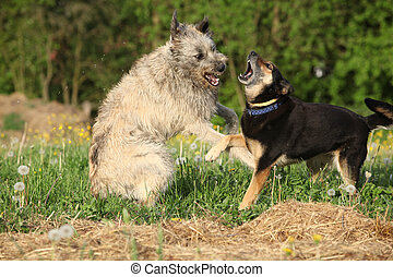 Two dogs fighting with each other in green grass