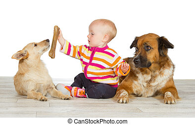 Two dogs flanking a cute baby which is offering the jack...