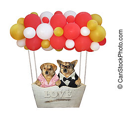 Two dogs in balloon