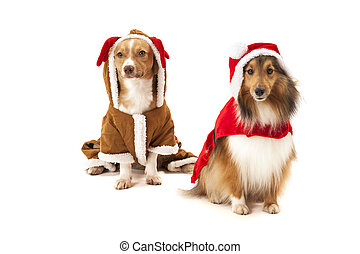 Two dogs in santa dress