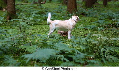 Two dogs in the forest