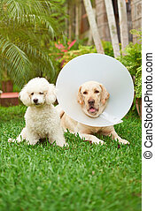 Two dogs in veterinarian service