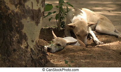 Two dogs laying on the ground close to a tree - A close up...