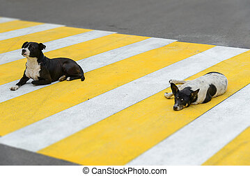 Two dogs lie on a pedestrian crossing