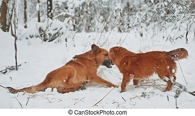 two dogs lifestyle fighting in the snow winter. two dogs...