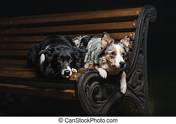 two dogs lying on a bench