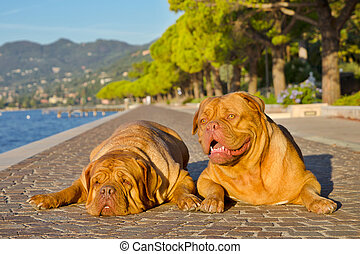 Two dogs lying on a paved alley bear the shore