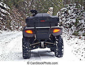 Two Dogs on a 4-Wheeler