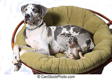 Two dogs on chair