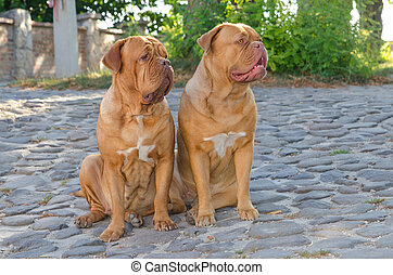 Two dogs on the street