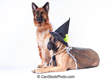 Two dogs on white background in costumes