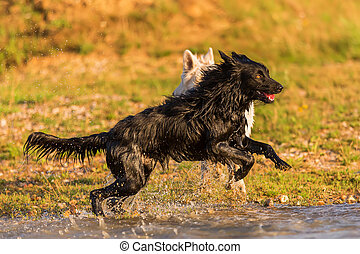 two dogs play in a lake