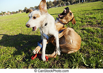 Two Mixed Breed Dogs Two Dogsleft Mix Pitbullright Mixed Great