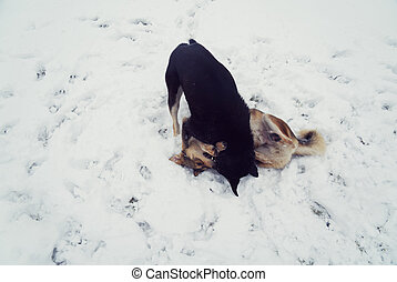Two dogs playing in the snow.
