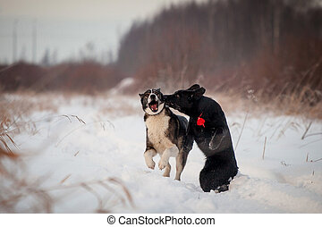 Two dogs playing in the winter field