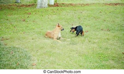 Two dogs playing on the lawn, slow motion