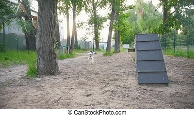 Two dogs running in the Park