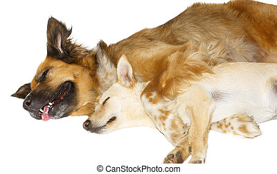 Two dogs sleeping on white background