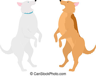 two dogs standing on hind legs - two dogs, orange and white...