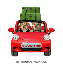 Two dogs travel in red car