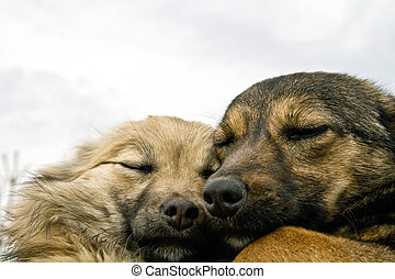 Two dogs warming each other - Two cute dogs warming each...